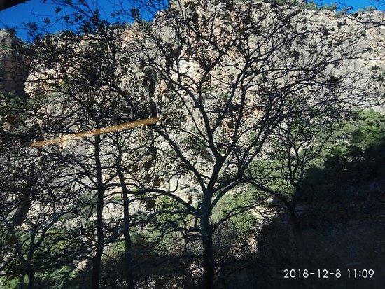 Калаврита, Греция: Διαδρομή από Καλάβρυτα προς Διακοφτό με το τραινάκι.