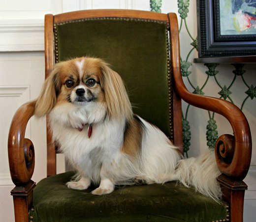 "Stone House Musical B&B: Precious. ""Our Pup Pup"" in Natchez."