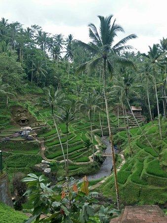 Тегалаланг, Индонезия: Tegalalang