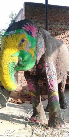 Jaipur District, India: Jaipur Rajasthan elephant village