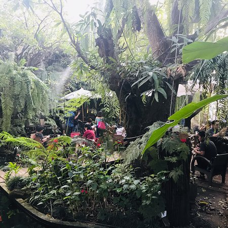 Fern Forest Cafe Photo