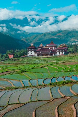 View of the thimphu dzong with rice plantation in the front.