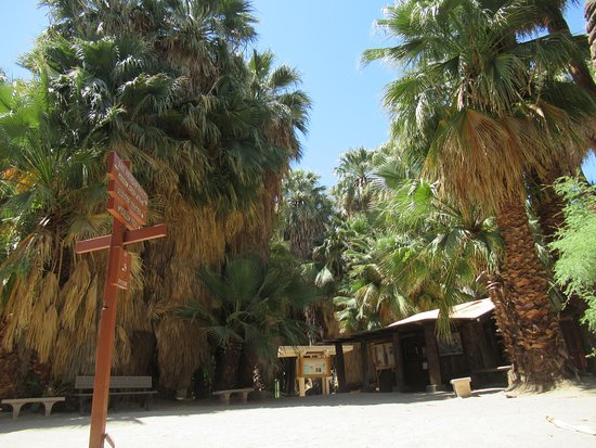 Thousand Palms Oasis, Coachella Valley Preserve, Palm Springs, California