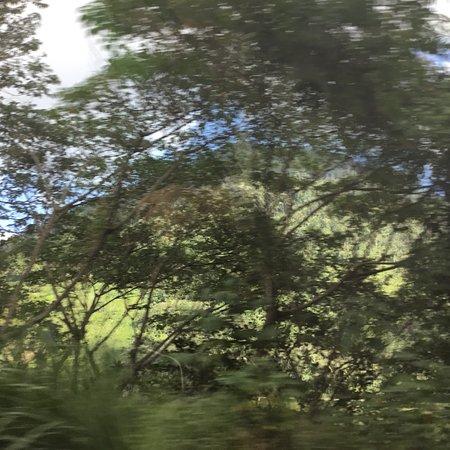 Lanao del Sur-bild