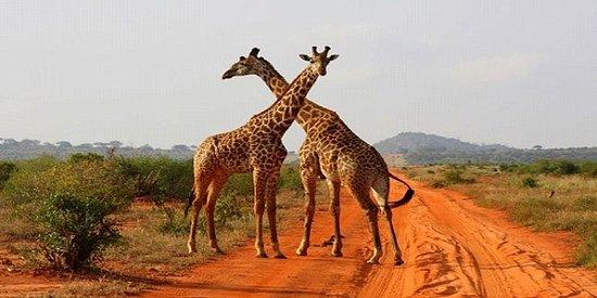 parco Amboselli