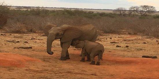 elefanto tsavo east