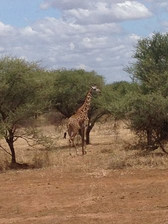 5 Days Tanzania safari: We've been so close to the animals!
