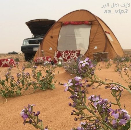 enjoy with majed tour and camp
