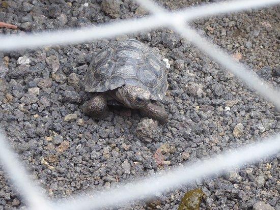 Giant Tortois Bild Von Galapaguera De Cerro Colorado San