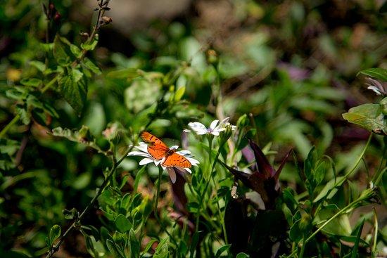 Butterflies visiting Woodlands