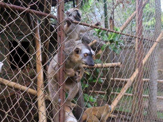 Lemuria Land: lemurien en cage