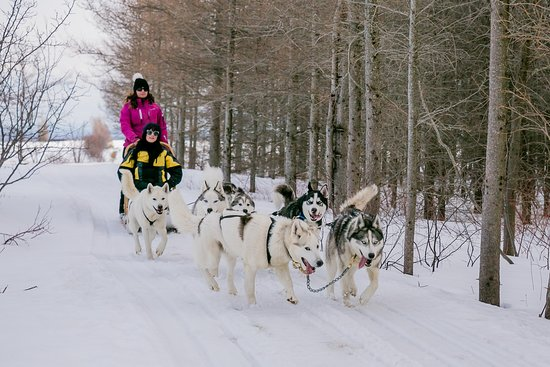 Expedition Mi-Loup  winter activity