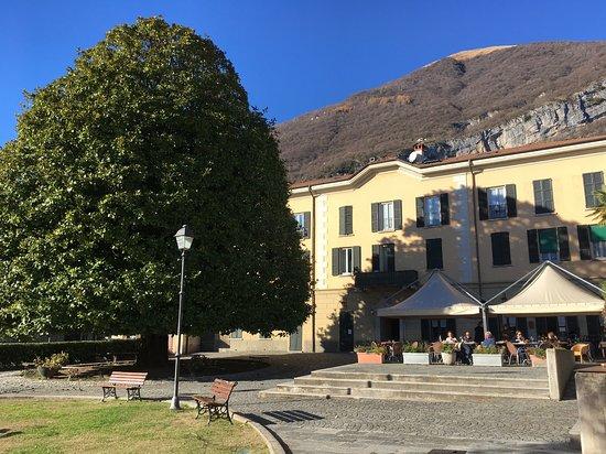 Mezzegra, Italy: L'immensa magnolia tra lago e l'Hosteria Magnolia