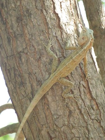 There were so many different types of lizards!!!