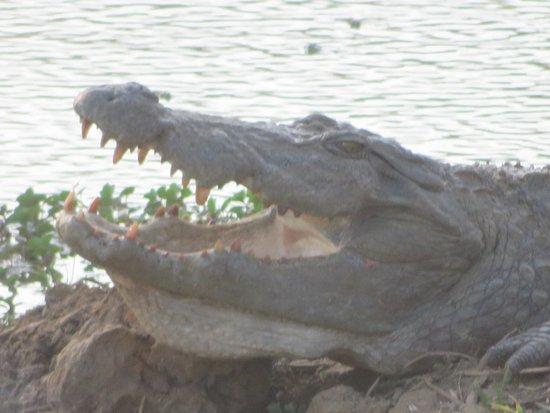 Sly croc!!
