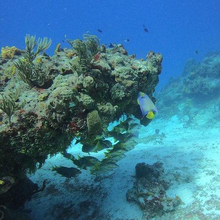 Studio Blue Cozumel Divers صورة فوتوغرافية