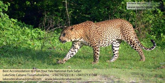 Yala National Park 사진