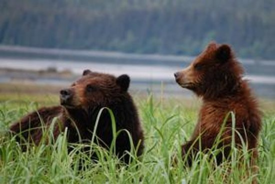Exclusive Pack Creek Bear Viewing...