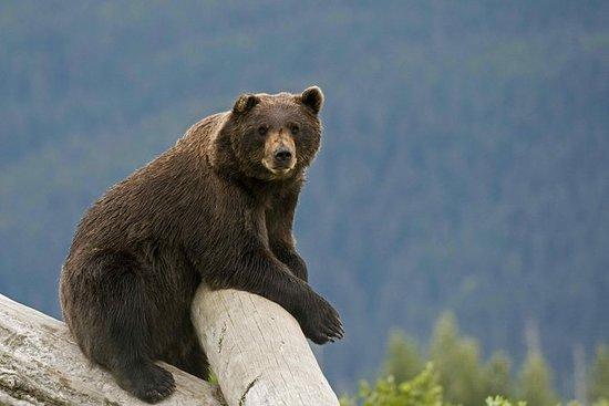 Baia di Turnagain e fauna selvatica