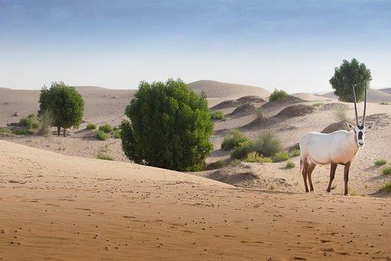 Abu Dhabi Telal Resort Desert Safari...