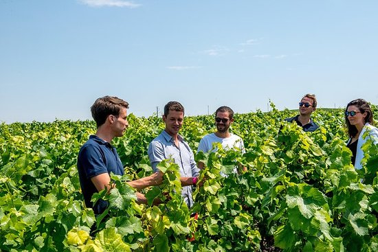 Small-Group Champagne Tour with...