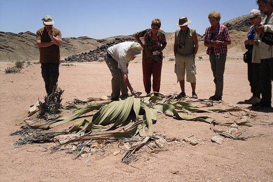 Namib Desert Tour från Swakopmund