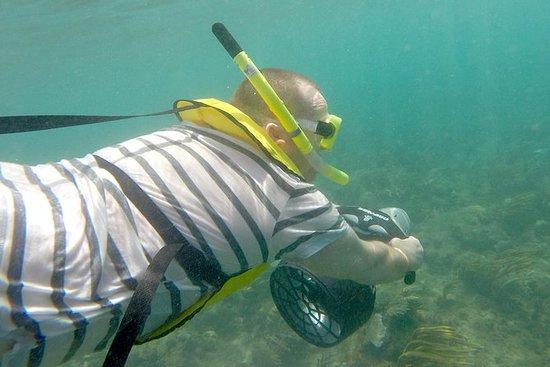 Unterwasser-Schnorchel-Safari in...