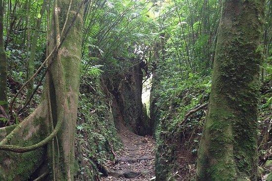 サンファンデルスルからのモンバッハ火山ハイキングとジップライニングの冒険