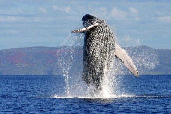 Whale Watching Day Trip in aereo da
