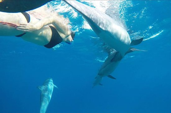Kona Wild Dolphin and Reef Snorkel...