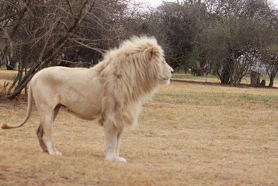 Rhino et Lion Safaris