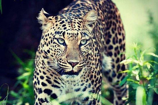 Kruger National Park Early Morning...