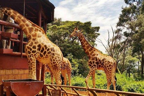 David Sheldrick, Giraffe Center e