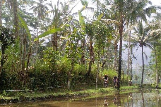 Monte Batur para Ubud Off Road