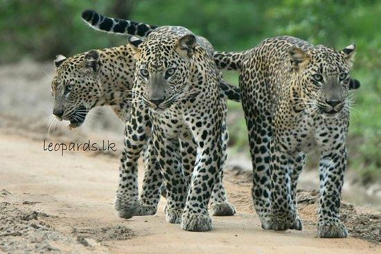 Ganztägige Leopard Safari Tour im...