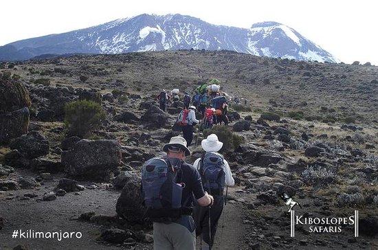 Monte Kilimanjaro Trek de 7 dias