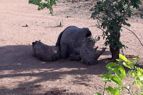 Spillvisning og vandring safari for å...