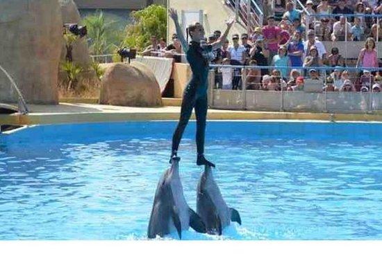 Dolfijnenshow, Sharm El Sheikh