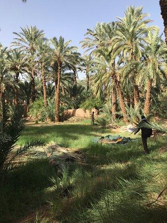 3-Day Private Morocco Desert Tour from Marrakech to Erg Chegaga Dunes: Oasis in Zagora before entering Erg Chegaga