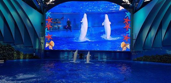Oceanarium dolphin show