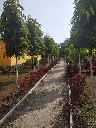 Jaldapara Wildlife Sanctuary-bild