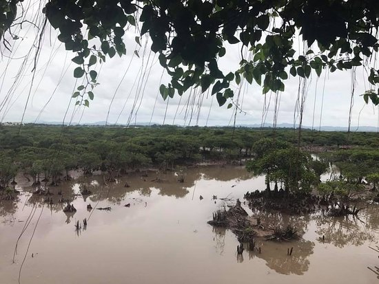 Provinz Quang Ninh, Vietnam: Rừng ngập mặn Tiên Yên, Đòng Rui.