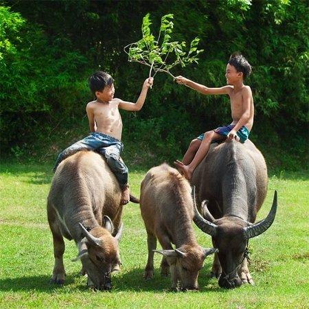 Ảnh về Đồng bằng Mekong