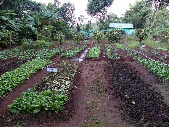 le jardin bio