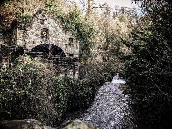 The abandoned mill in the Dene.