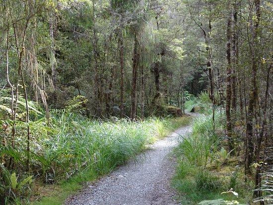 Пунакайки, Новая Зеландия: forest