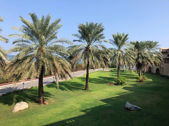 Miramar Al Aqah Beach Resort: view