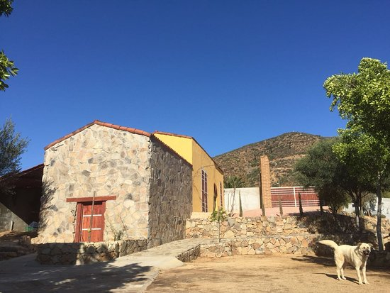 Valle de Guadalupe, เม็กซิโก: Barrel room and Toby