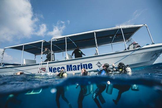 Foto de Neco Marine
