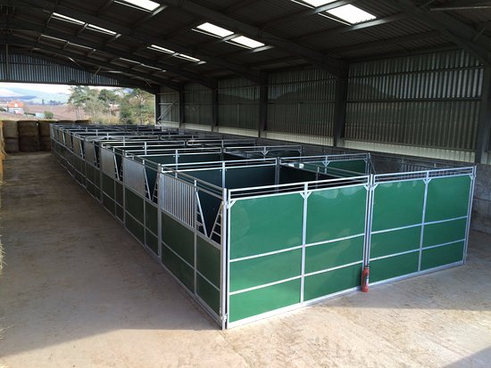 18 Chival Liberte 3m x 3m stables for hire